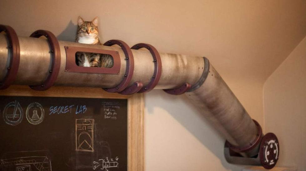 Ett rör att krypa och gömma sig i – hur mysigt och kul som helst, tycker katten.