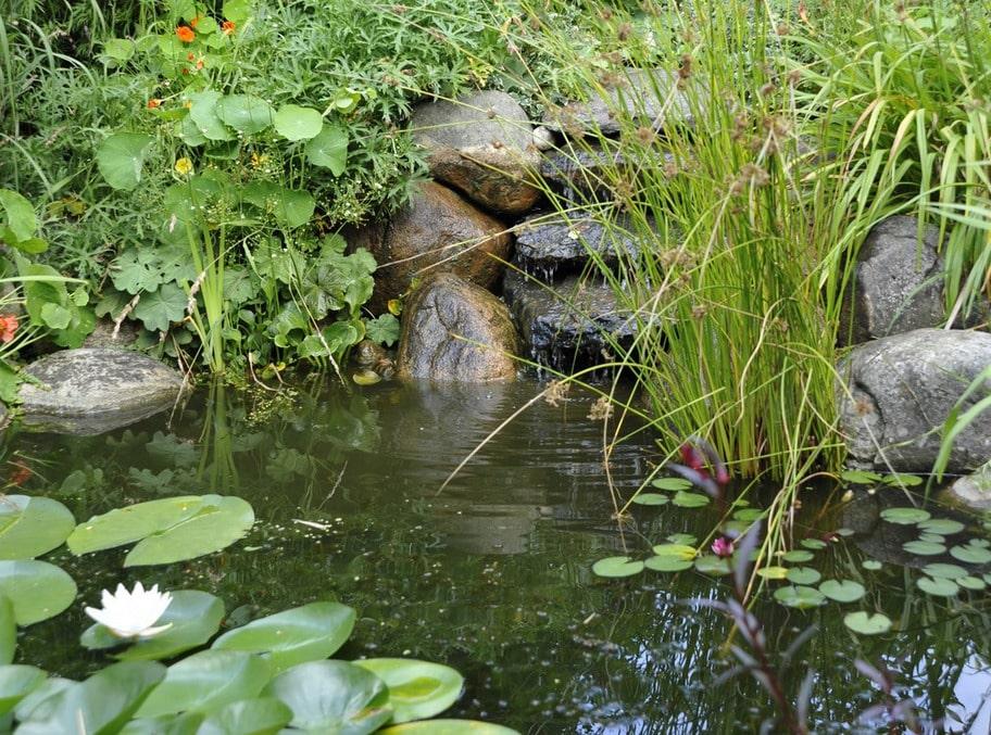 DAMMEN EFTER ETT ÅR Mycket snabbt ramade växtligheten in dammen och redan året efter smälte den in på ett naturligt sätt. Blir det inte alltför kalla vintrar kan pumpen hindra dammen från att bottenfrysa och fiskarna överlever vintern. Gör de inte det får man köpa nya.