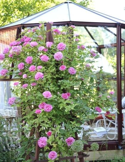 BRA VAL. Nina tror inte att du kommer att ångra dig om du satsar på ett växthus till din trädgård.