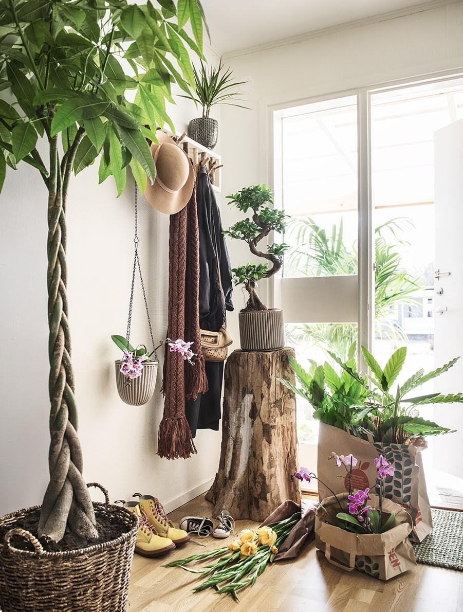 De gröna växterna är fortfarande populärast bland inomhusväxterna. Ta med dem som en del i inredningen och inte bara som prydnad i fönstren. Och glöm inte, grönt är dessutom 2017 års färg enligt alla trendexperter!