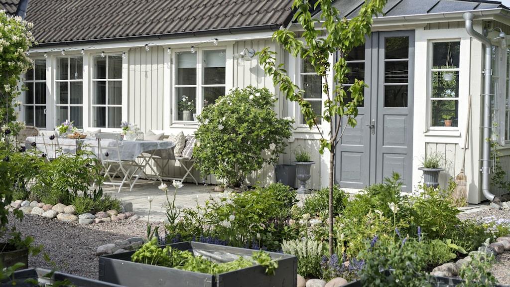 Pallkragarna är målade i samma gråa färg som dörrarna på huset, och skapar en röd tråd i trädgården. Här odlas köksväxter som sedan kan skördas långt in på hösten.