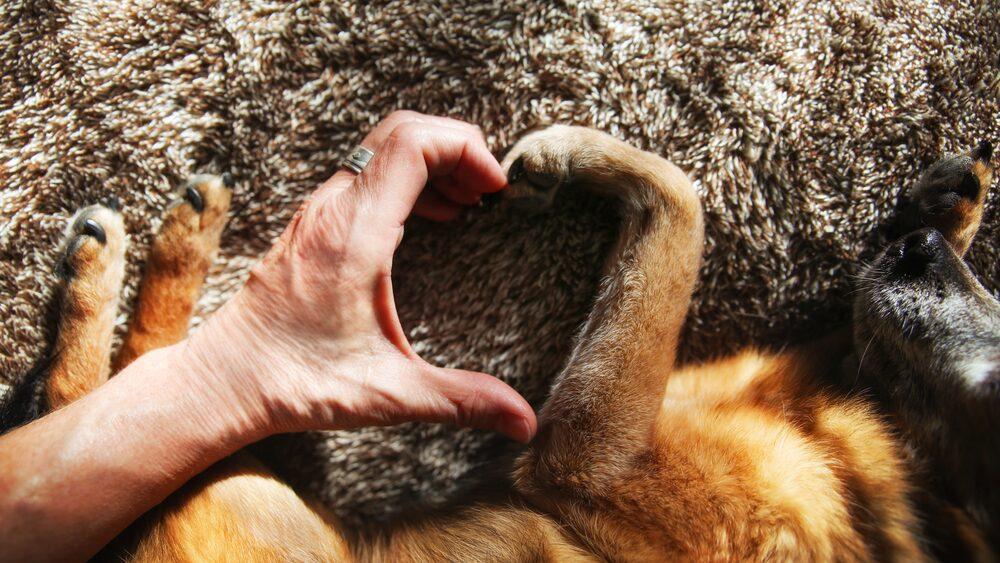 Lördag den 26 augusti är det hundens dag, så ge din bästa vän lite extra kärlek.