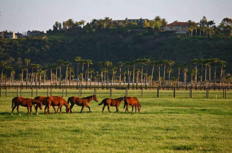 Även om inga djur ingick i köpet finns det massor av plats för att ha hästar här.