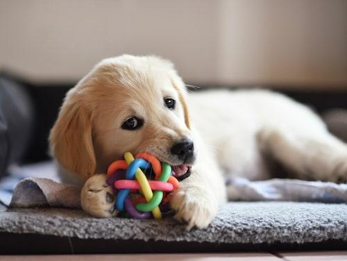 En bedårande liten hundvalp.
