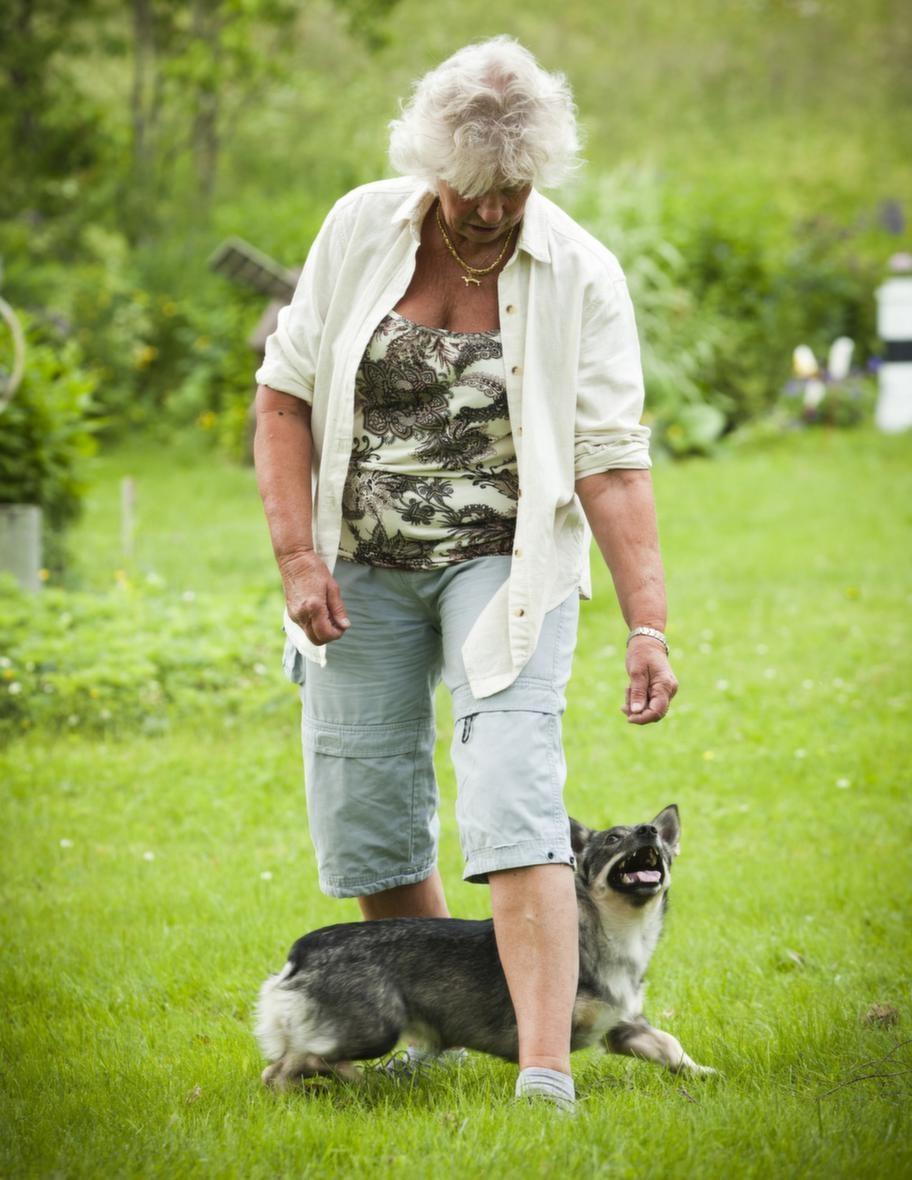 TRICK: KRYSSA MELLAN MATTES BENSteg 3: Rör er framåt. Flytta dina ben i takt med hundens rörelser så att ni båda rör er framåt.