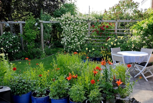 I krukorna på terrassen framför den gulröda solrabatten med sina färgstarka liljor kommer dahlior i olika nyanser att blomma.