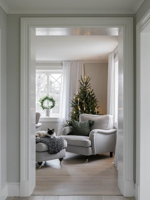 Katten Ärnst ligger och spinner på fotpallen i vardagsrummet. Här inne finns en av många granar som ger hemmet ombonad julkänsla.