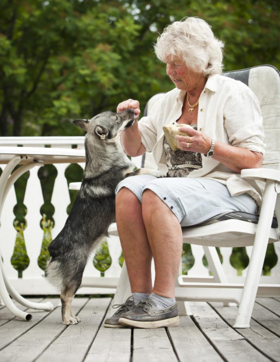 """TRICK: HÄMTA EN SKOSteg 1: En god belöning. Lägg  ett föremål som hunden gillar framför dig och uppmuntra hunden att ta  det. Barbro sa """"får matte den"""" till sin hund Dixi. När Dixi tog  föremålet i munnen bytte Barbro snabbt ut det mot en godisbit. Efter  några gånger förstod Dixi vad det handlade om och Barbro kunde vänta  längre med att byta med godbiten. När föremålet ramlade i golvet blev  det ingen belöning utan de började om igen."""