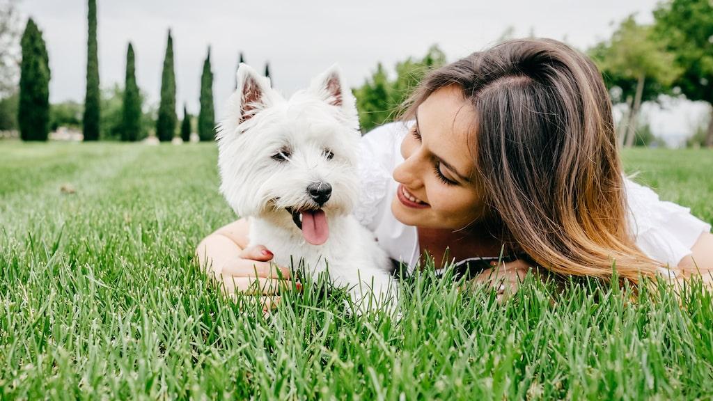 Har du husdjur eller funderar på att skaffa? Grattis! Enligt forskning är husdjur bra för både din psykiska och fysiska hälsa.