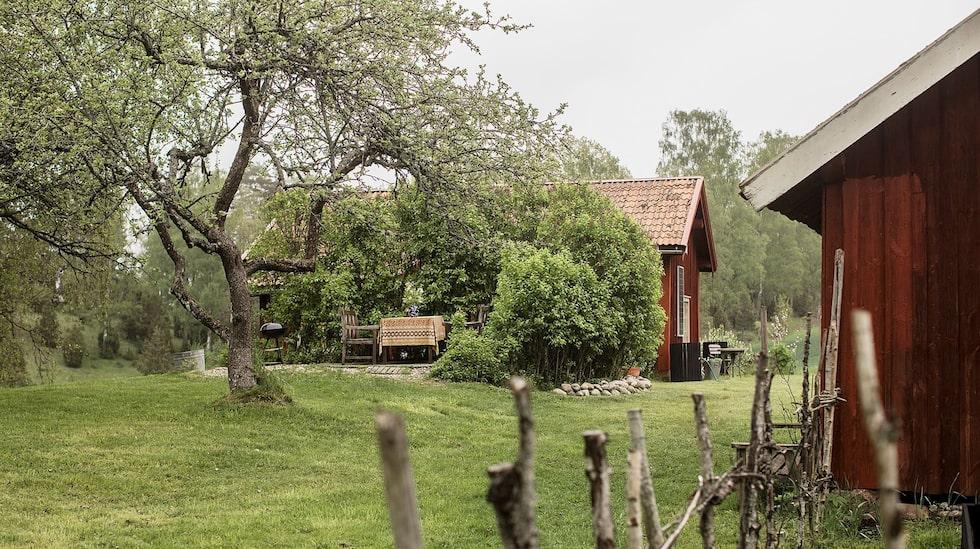 Tomten, på dryga 1 400 kvadratmeter, har härliga träd och massor av yta för odling och lek.