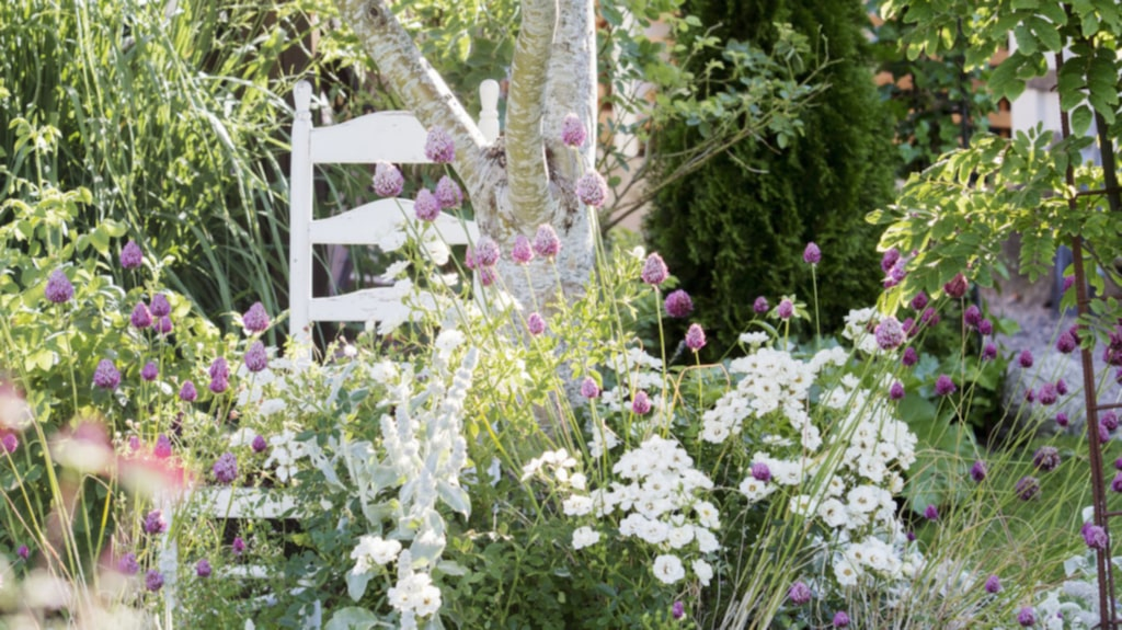 """<p>Under äppelträdet """"Filippa"""" frodas ljuvliga perenner som lammöron, klotlök och rosen """"White cover"""".</p>"""