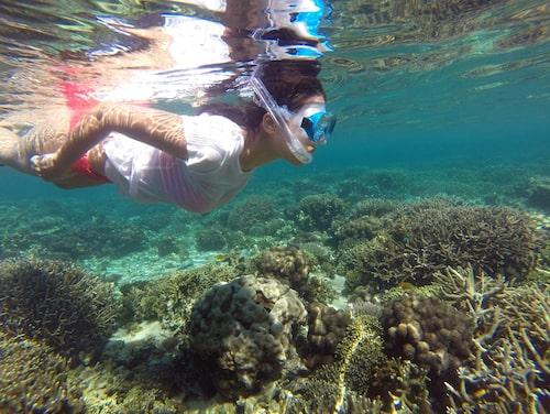 Under ytan vid Anakao Beach på Madagaskar finns myriader av fiskar och tropiska fåglar.