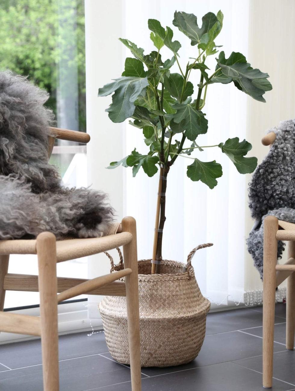 Att inreda med växter kan verkligen lyfta ett hem, menar Frida.
