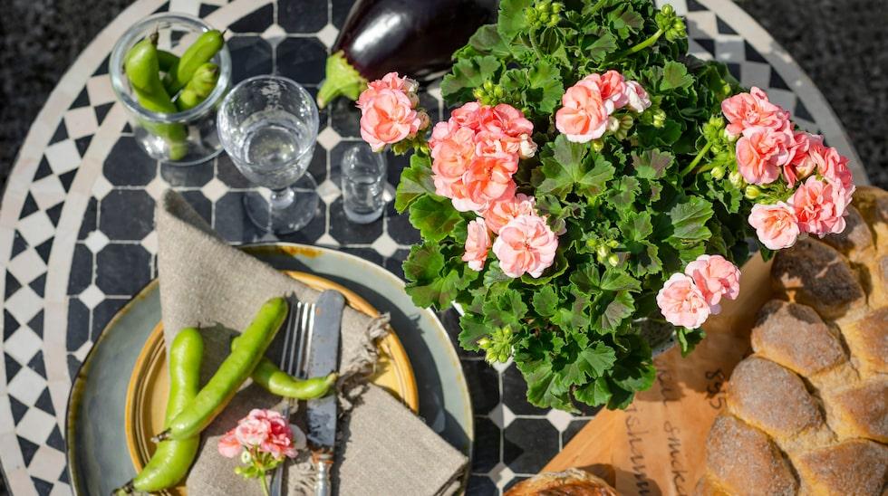 """I Sverige säljs """"Årets pelargon"""" under namnet Astrid, men i vissa andra länder i Europa heter den Rosebud Astrid och i USA kallas den Rosalie."""