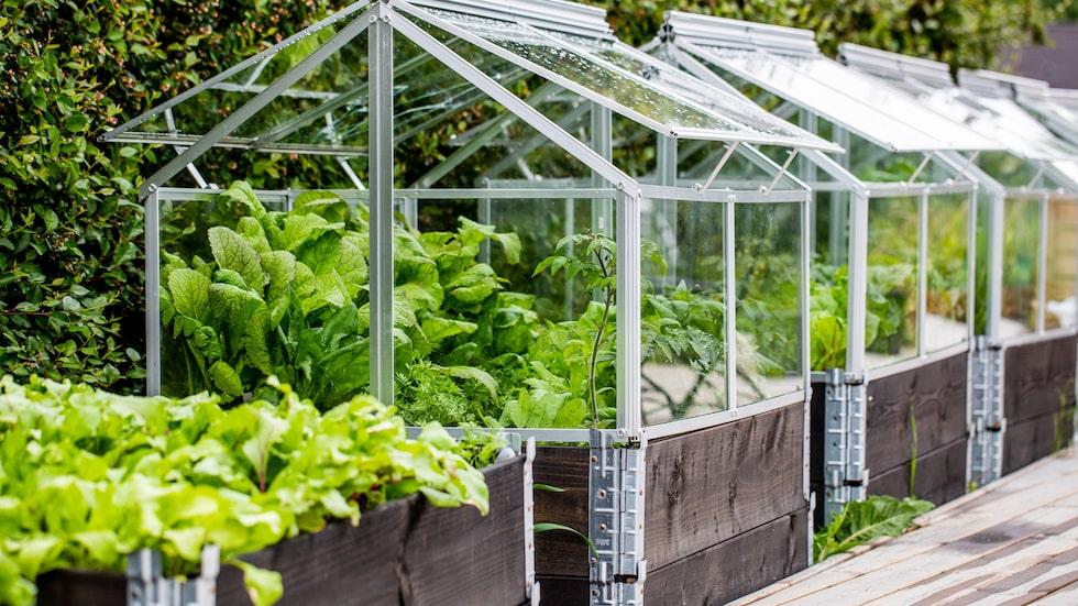 Odla i pallkrage har blivit väldigt populärt. Det finns många fördelar med att plantera grönsaker, bär och växter här. Vill du kan du dessutom göra pallkragen till ett litet växthus.