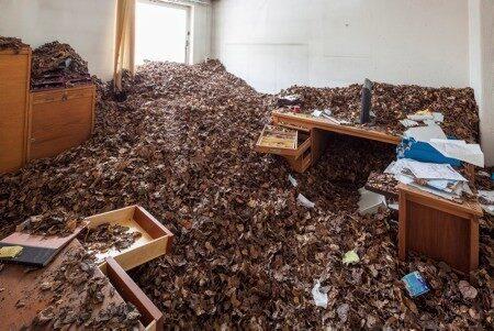 Ett annat kontorsrum har man låtit fylla med löv...