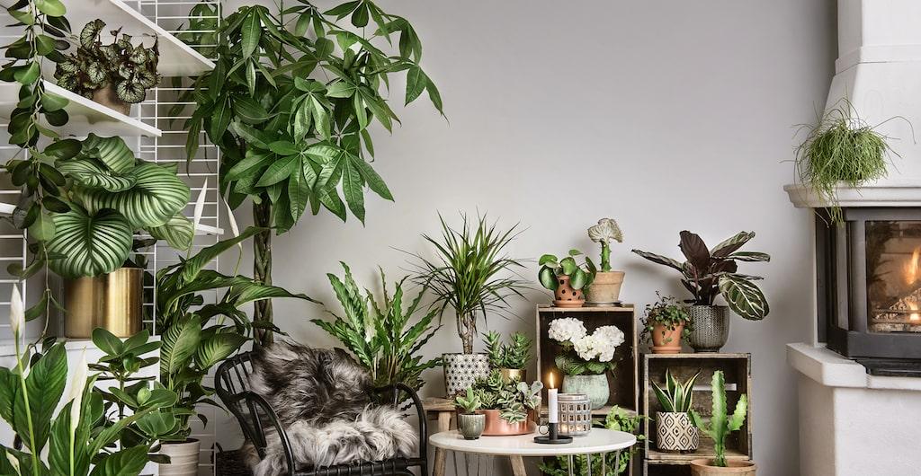 2016 var året när det här med inredning och växter blev stort på riktigt. Vi möblerade med växter, odlade hemma, målade med gröna kulörer, och värnade om miljön. Grönt är mer trendigt än någonsin och kommer bara ännu mer 2017.