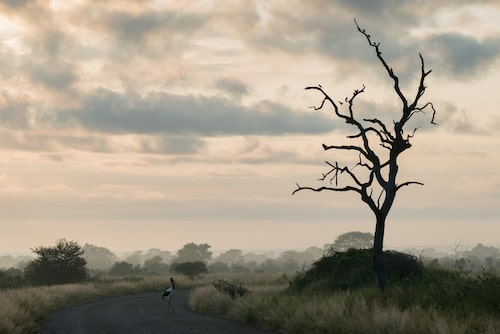 Kruger i Sydafrika är stort och vägnätet omfattande. I vissa delar kan det ibland vara många bilar, men det går också att hitta helt öde områden.