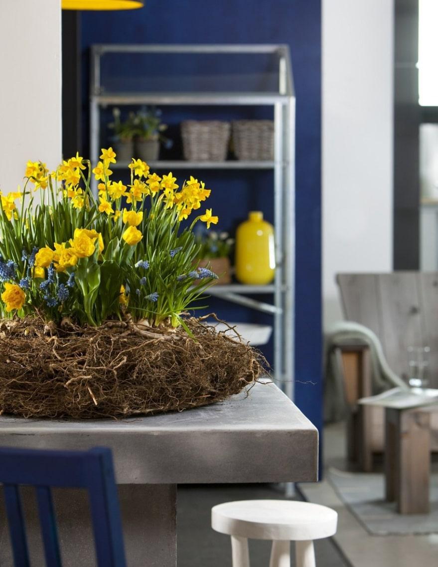 Svenskt. Gult och blått, det blir man glad av. Tulpaner, minipåskliljor och pärlhyacinter. Ställ krukorna tillsammans och gör en krans av mossa, gräs, halm, rötter, grenar eller vad du har tillgång till.
