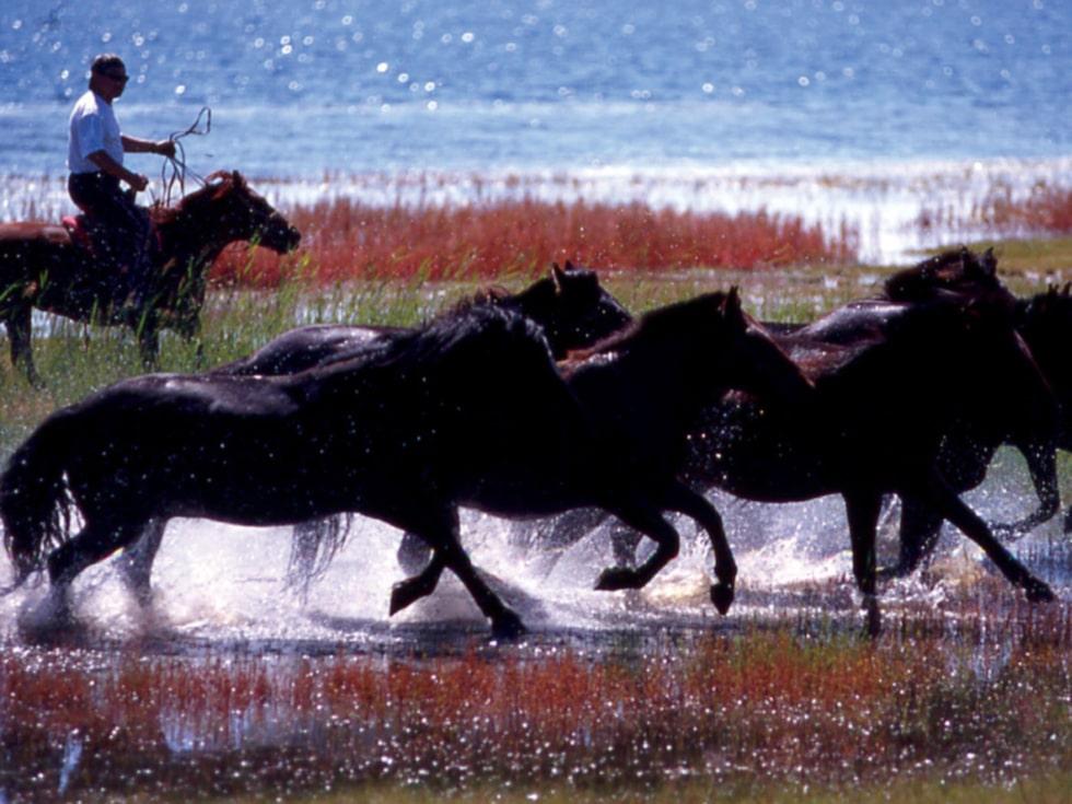 Till Mongoliet, mellan Ryssland och Kina, reser många för att få uppleva den vidsträckta stäppen, gärna från hästryggen.