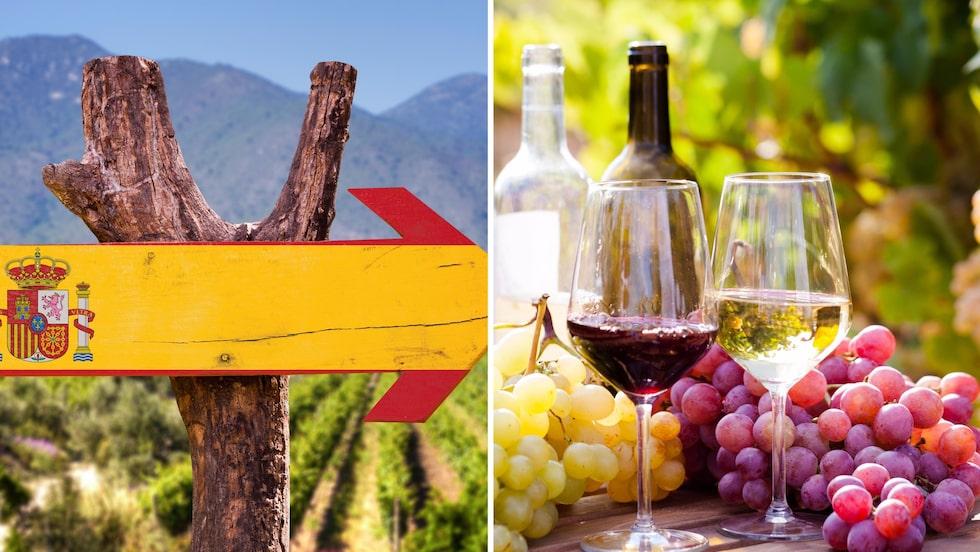 Spanien är ett populärt vinland på Systembolaget. Här sammanfattar experten det populära vinlandet med prisvärda tips.