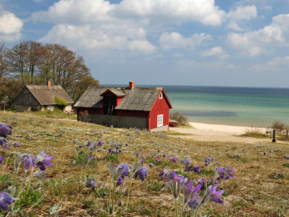 Skåne lockar ovanligt många turister från Storbritannien i år.