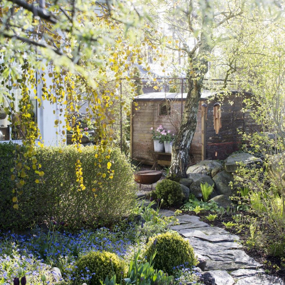 För Viktoria är det viktigt med olika rum i trädgården, så att man inte ser allting på en gång. Gångar som rundar häckar är bra - en trädgård ska upptäckas!