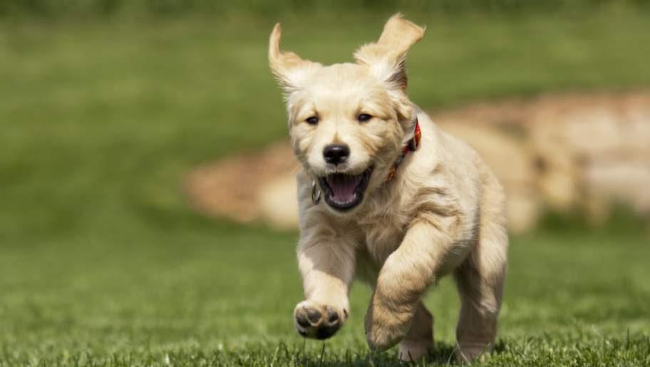 Speciellt hundar främjar psykologiskt och terapeutiskt välbefinnande.