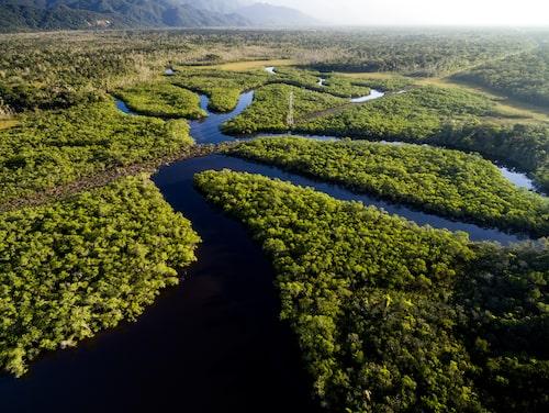 Extrem torka hotar regnskogens träd.