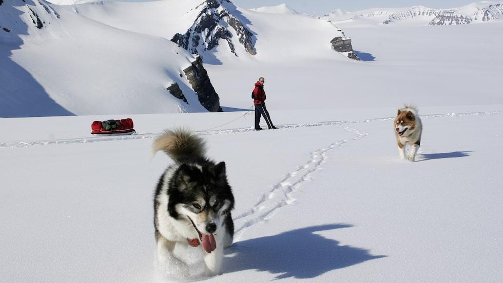 Spetsbergen är den största ön i ögruppen Svalbard. Här är det populärt med hundspann.