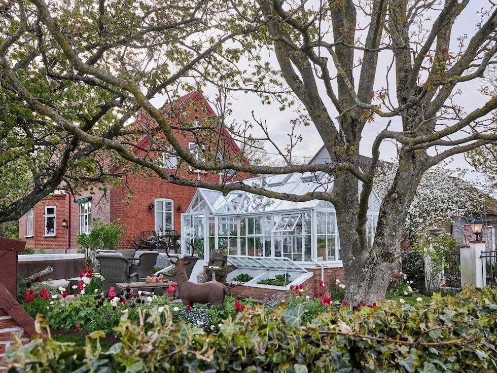 Vy över Eklaholms privata trädgård vid växthuset där Karl Fredrik och Petter har skapat vackra uteplatser med bland annat tulpanrabatter och skulpturer.