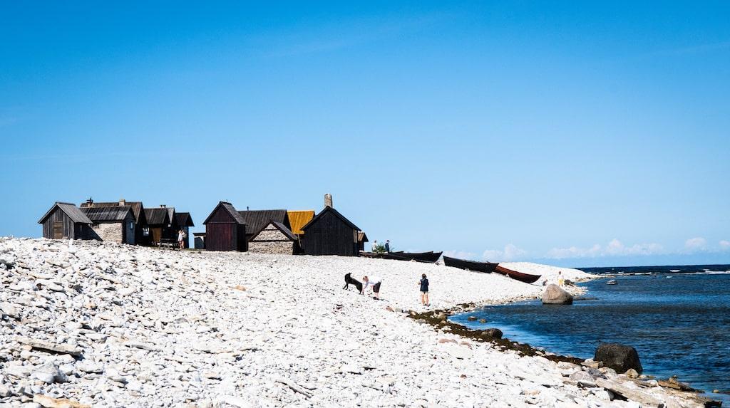 Vid Digerhuvuds naturreservat på Fårö ligger Helgumannens fiskeläge direkt på strandvallens klappersten.