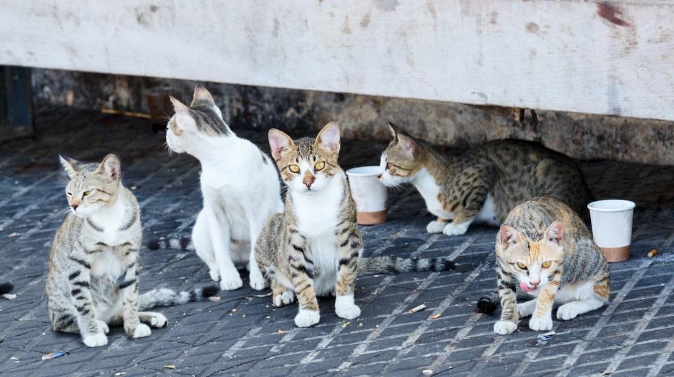 Katter kan bära på rabies, skabb och löss.