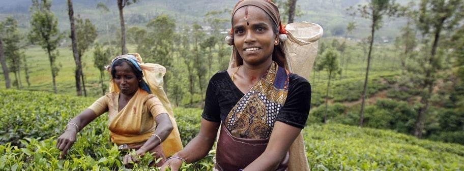 """Vi frågar om jobbet på tefälten är tungt. """"Nej det är lätt"""" svarar kvinnorna, men vi tror de inte. Lönen är cirka 30 kronor om dagen."""