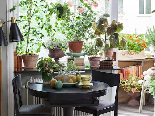 Fyll ditt hem med krukväxter – för hälsans skull.