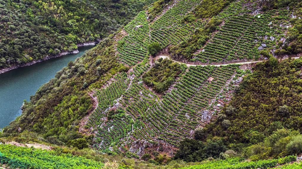 Det finns mycket fint att upptäcka på sidan av Rioja, Ribeira Sacra till exempel.
