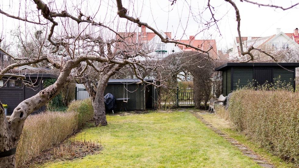 Trädgården är på ungefär 115 kvadratmeter.
