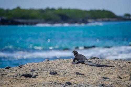 Galapagosöarna, Ecuador