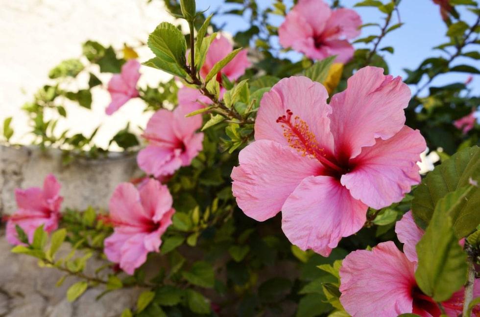 Färgprakt. Vackra blommor finns året runt.