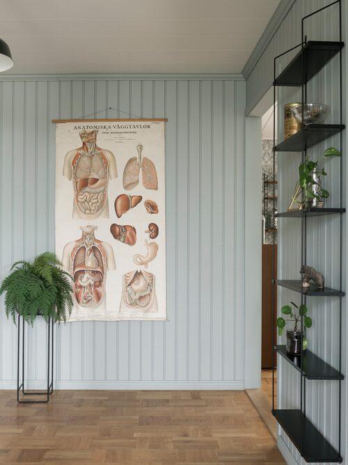 """Fanny köpte anatomiplanschen när hon och Petter bodde och pluggade i Karlstad. """"Den har hängt med länge och är verkligen en favorit"""". Väggarna är målade i kulören Sommarregn, från Alcro."""