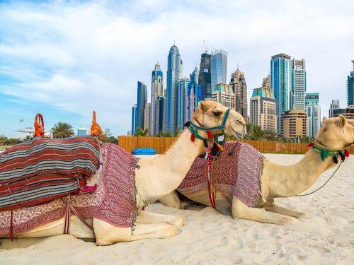 Under de senaste decennierna har Dubai framför allt gjort sig känt för sina spektakulära byggnader och snabba expansion. Staden växer ständigt och den ena byggnaden är vräkigare än den andra.