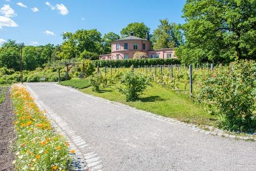 Kungliga Djurgården i Stockholm, ett stycke paradis mitt i storstaden.