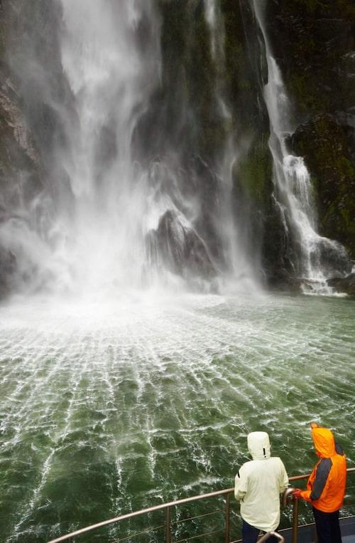Kom nära sälar, delfiner, pingviner och vattenfall.
