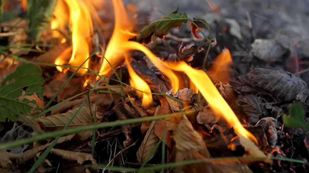 Om det är något som brinner på marken går det alldeles utmärkt att använda vanligt vatten för att släcka.