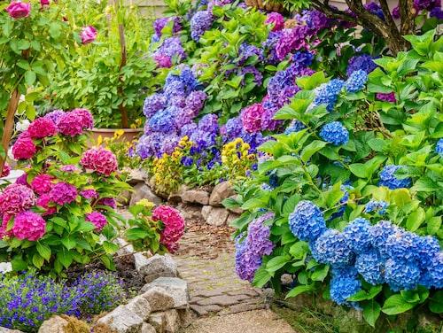 Färgstarka blommor passar bra i soliga lägen.