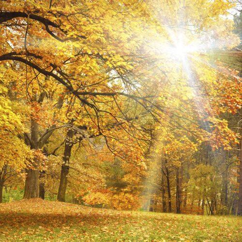 Solljus är bästa källan till D-vitamin.
