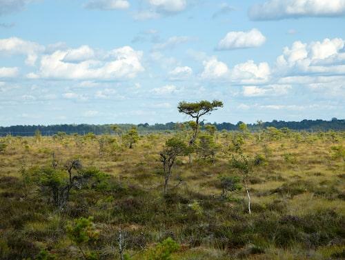 Store Mosse nationalpark ligger mellan Gnosjö och Värnamo.