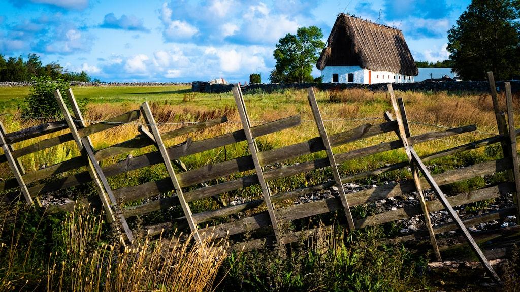 Det karga hedlandskapet runt Stora Gåsemora på Fårö rymmer både klassiska Gotlandsbyggnader med halmtak och väderkvarnar.