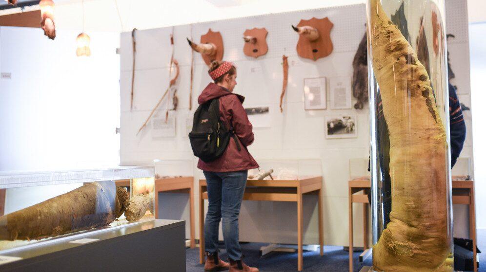 Hjörtur Gísli Sigurðsson tog över Islands Fallologiska museum efter sin far som började samla penisar 1974 och öppnade det unika museet 1997.