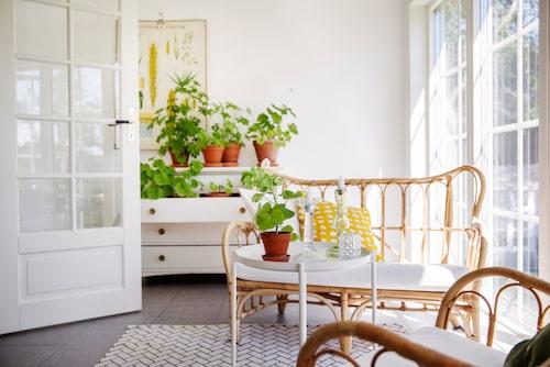 I det trivsamma uterummet flödar solljuset in genom de höga fönstren. Korgstolar och bord, Ikea. Gul kudde, Svenskt Tenn. Matta, Granit.